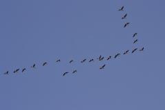 flock-286062_640
